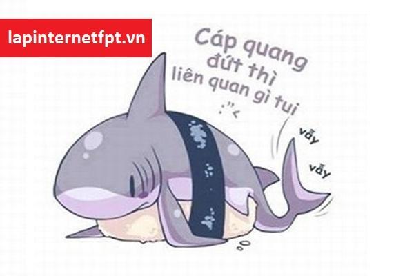 Nguyên nhân làm cho đứt cáp quang biển quốc tế